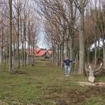 10 éves fa kivágást követően