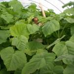 Rasadnik Florand - Za 3 meseca posle uzgajanja u plasteniku