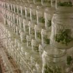 Rasadnik Florand - Laboratorija