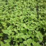 Rasadnik Florand - Aklimatizacija biljaka