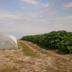 Rasadnik Florand - Za 3 meseca posle uzgajanja u otvorenom prostoru