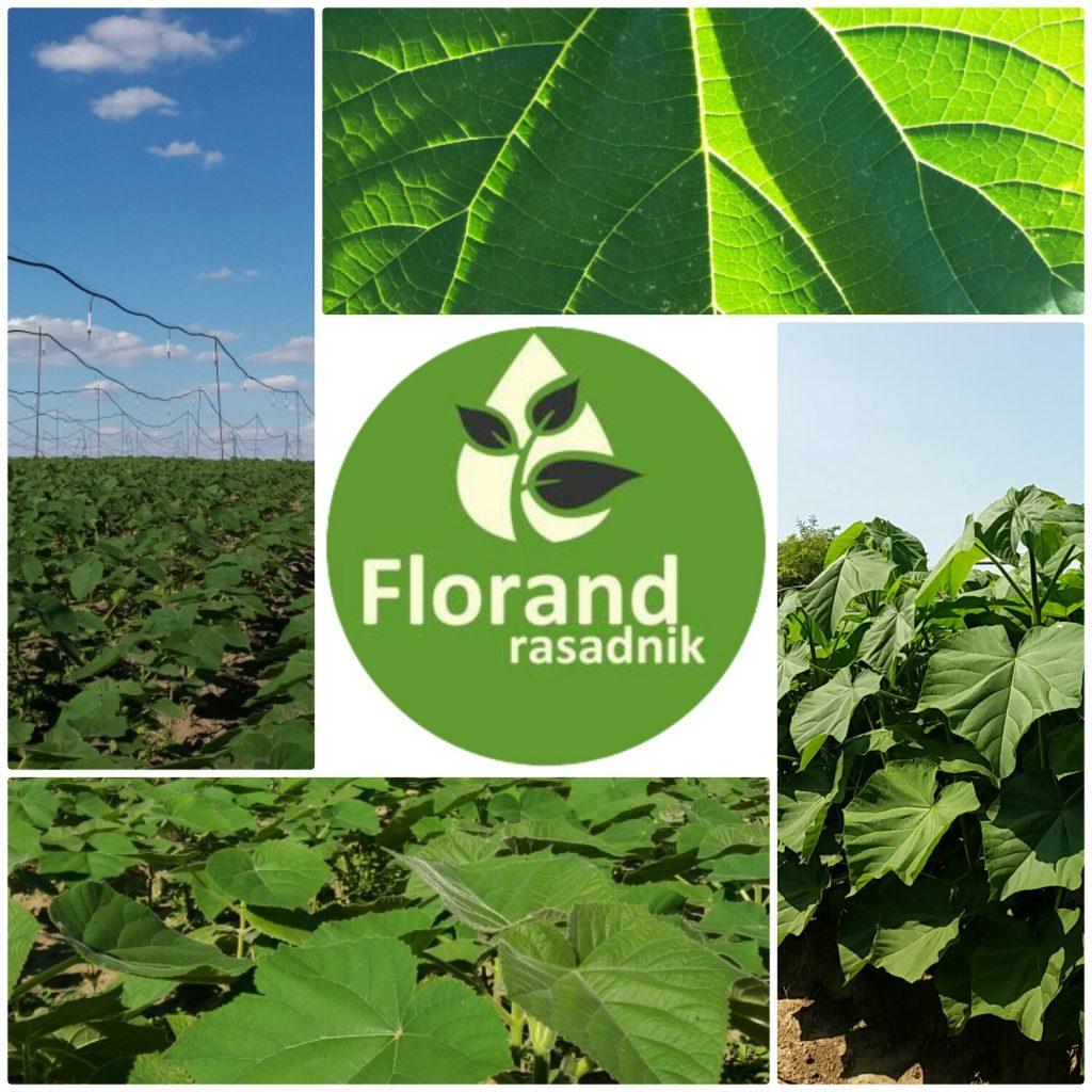 Leto 2016 - Florand Rasadnik